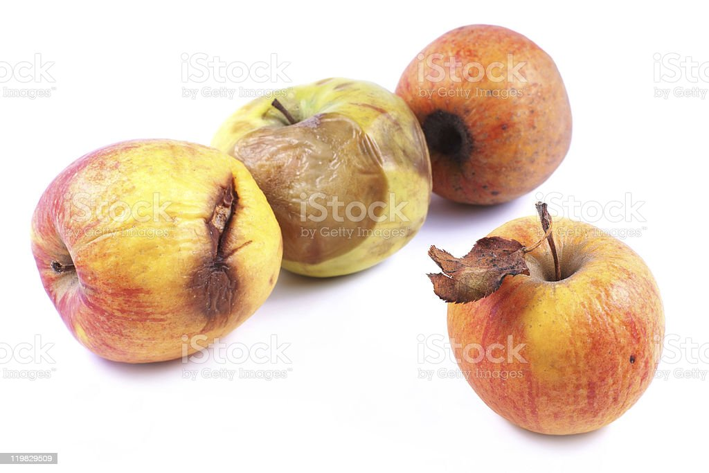 Apples, wilted, rotten on a white background royalty-free stock photo