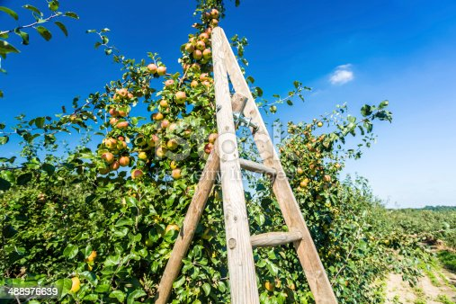 Apples with ladder