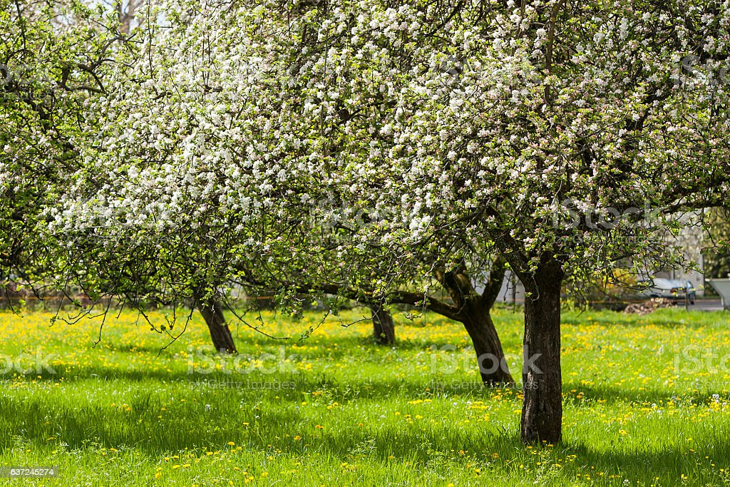 Appletree Landscape stock photo