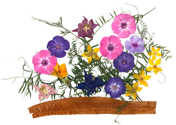 Application bouquet of dry flowers picture id613059154?b=1&k=6&m=613059154&s=612x612&w=0&h=iroiwq jdgqbybcyv56171opvynn5nd1qqzm7s4gstq=