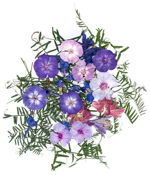 application bouquet of dry  flowers - 押す ストックフォトと画像