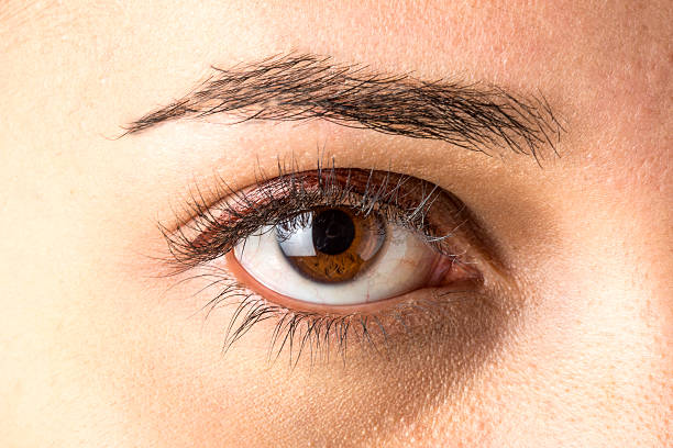 approaching brown eye woman - eyelid stock pictures, royalty-free photos & images