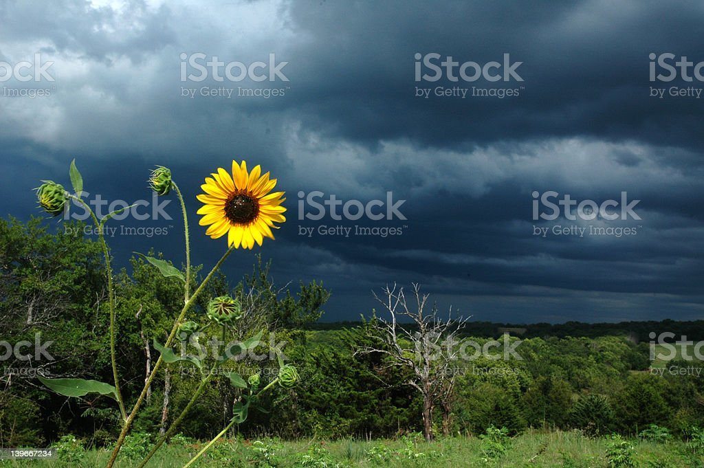 Approaching Thunderstorm royalty-free stock photo