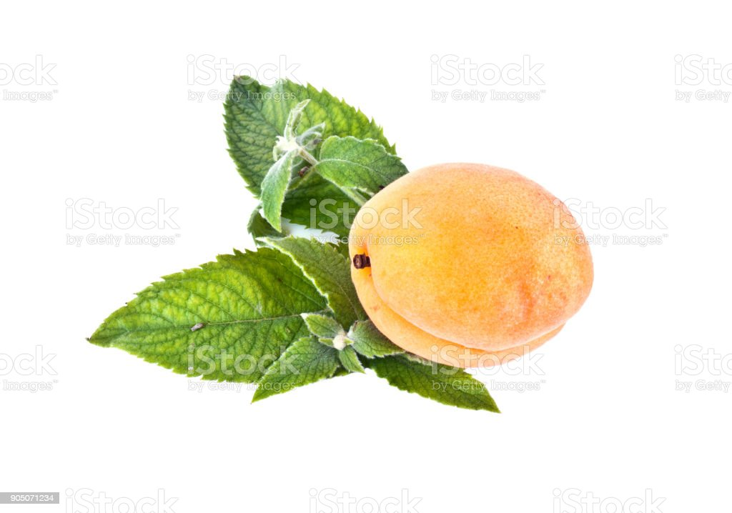 Apricot and mint leaves stock photo