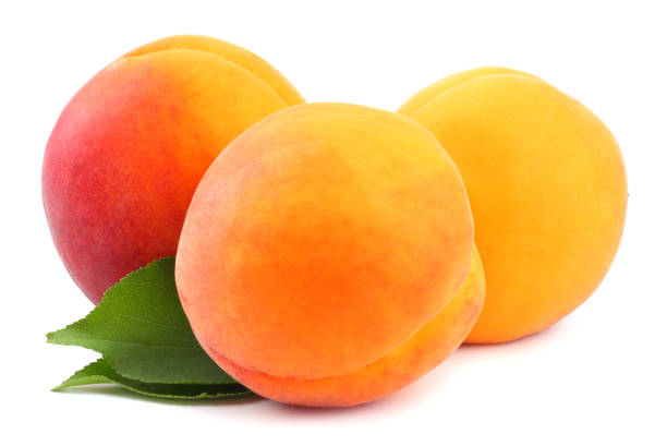 Aprikose Früchte mit grünem Blatt isoliert auf weißem Hintergrund Beschneidungspfad – Foto
