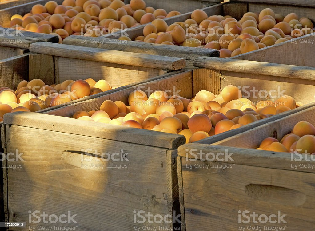 apricot in boxes royalty-free stock photo
