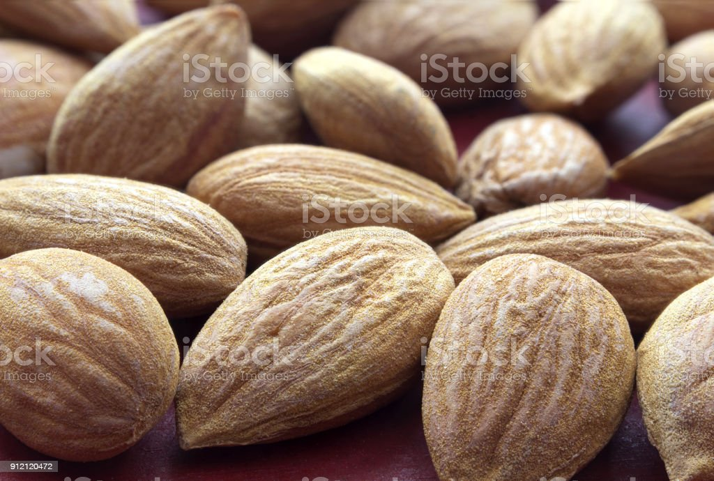 Apricot kernel stock photo