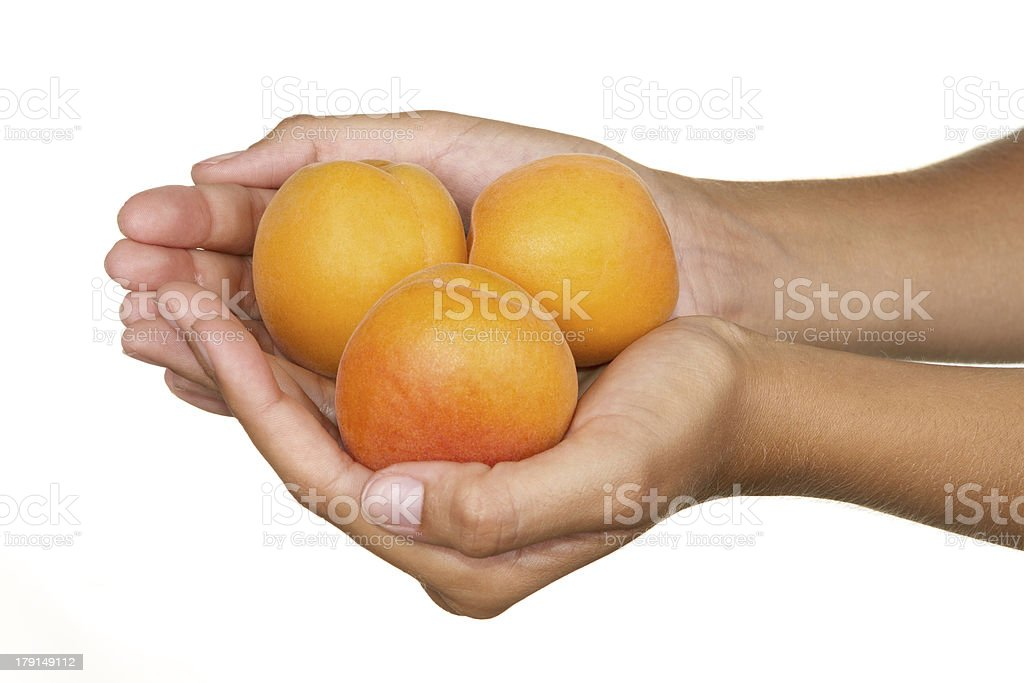 Apricot royalty-free stock photo
