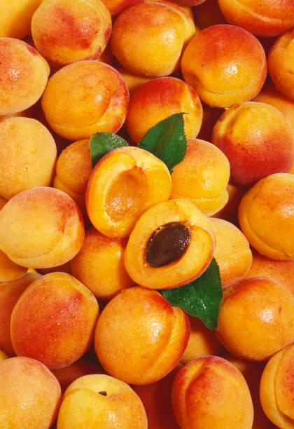 Apricot wallpaper (2) stock photo