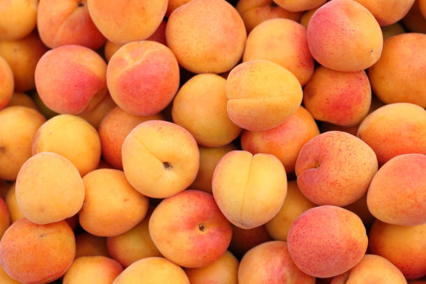 aprikosen - aprikose stock-fotos und bilder