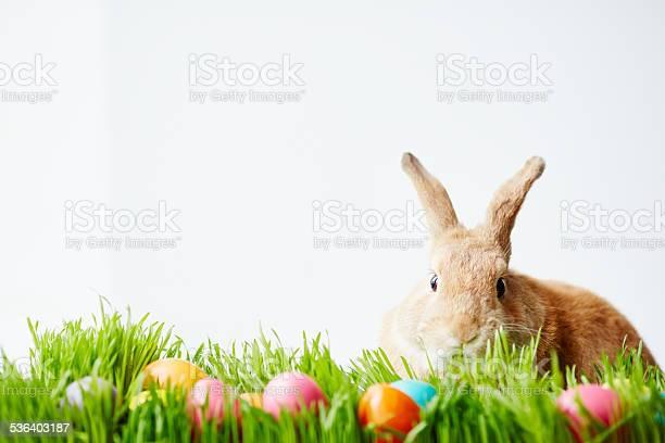 April bunny picture id536403187?b=1&k=6&m=536403187&s=612x612&h=fime7 84cicelafeamxxaly5unohmljhocf1cebyevi=