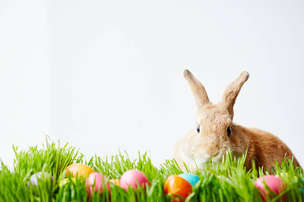 april bunny - easter bunny stock photos and pictures