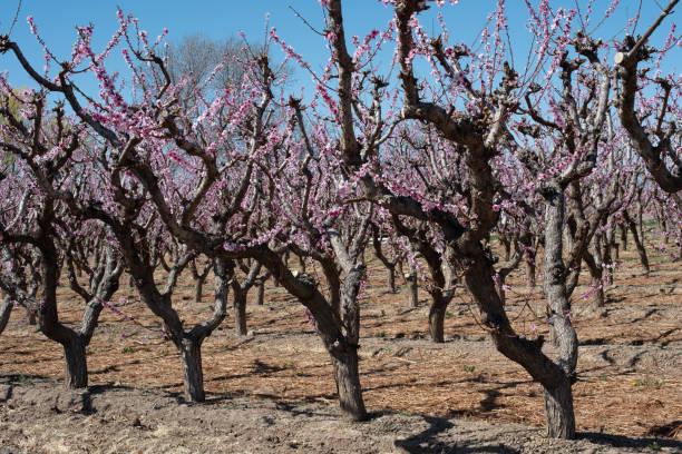 April day in western Colorado stock photo