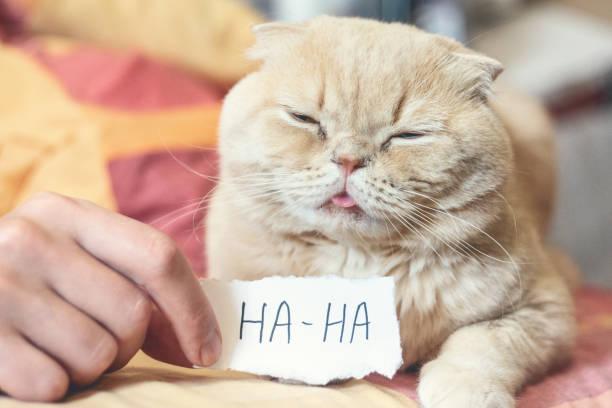 April fools day concept with funny moody scottish cat and paper sheet picture id1135345312?b=1&k=6&m=1135345312&s=612x612&w=0&h=mzakks9e10hhgpn0ouhcfk hnga6qbpolrvhvaf48z4=