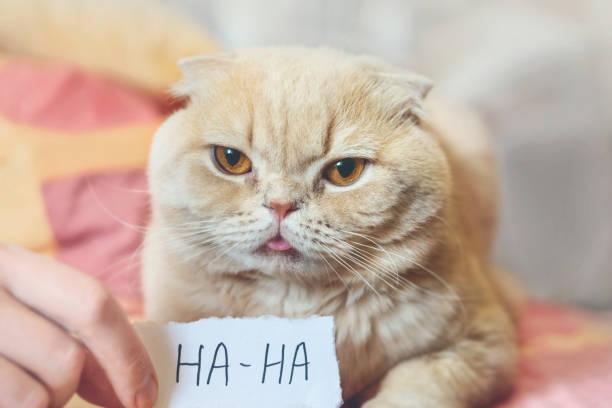 April fools day concept with funny moody scottish cat and paper sheet picture id1135349350?b=1&k=6&m=1135349350&s=612x612&w=0&h=r6gnmbahjeqn7 ne0kk4e8c7yjmwn5avjjpg9drlbcg=