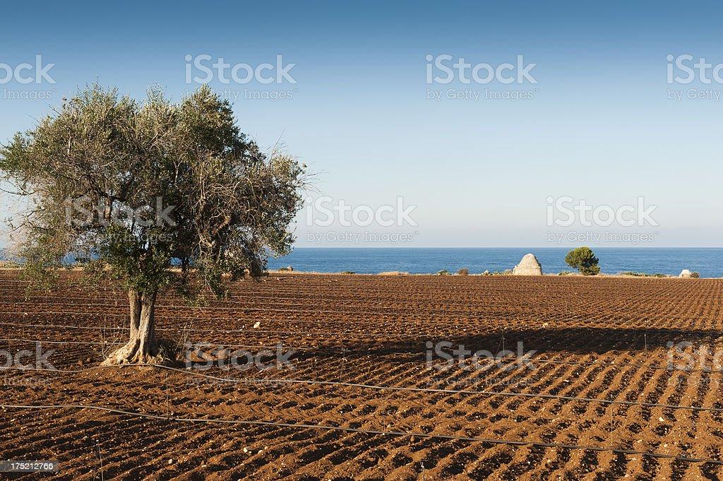 Pugliese, nell'Italia meridionale - foto stock