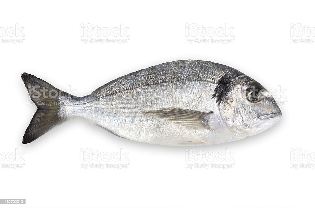 Aqua culture sea bream (with clipping path) stock photo