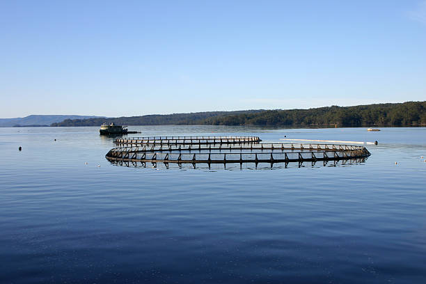 aquaculture system on a calm and still lake - aquaculture stock pictures, royalty-free photos & images