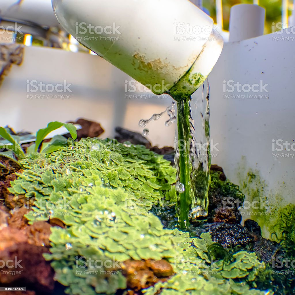 Aquaponics method of growing plants without soil stock photo