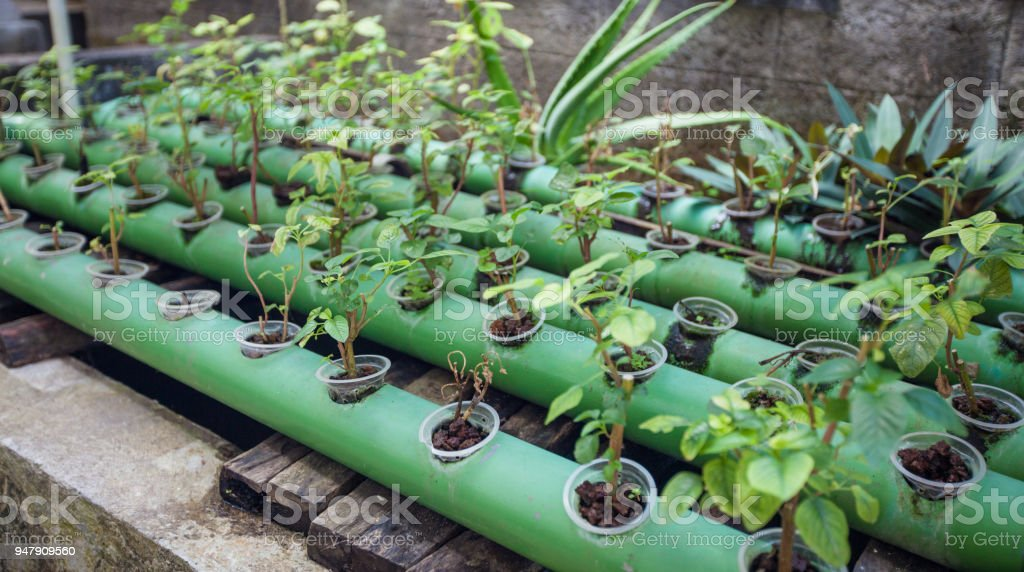 Aquaponics plants growing in pipes up on fish pond stock photo