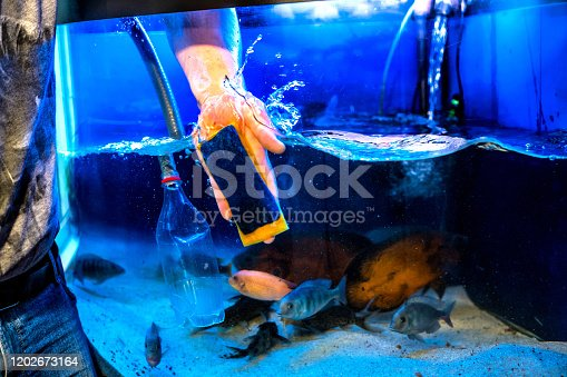 istock Aquarist and aquarium сare. Home aquarium cleaning process. 1202673164