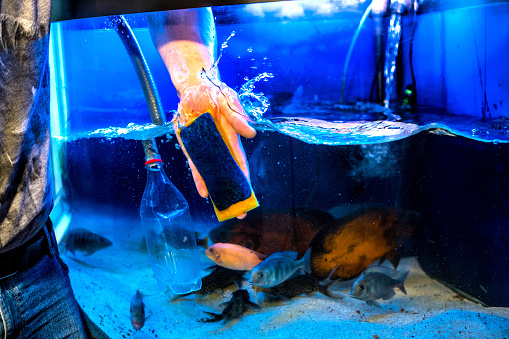istock Aquarist and aquarium сare. Home aquarium cleaning process. 1202673164