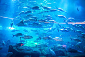 Aquarium and Under Water Zoo