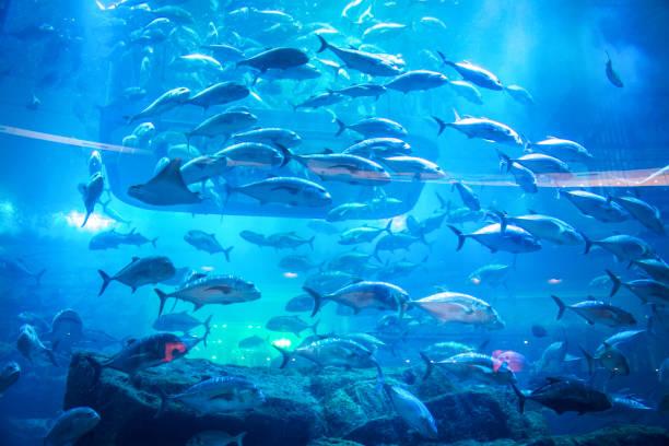 Aquarium and Under Water Zoo stock photo