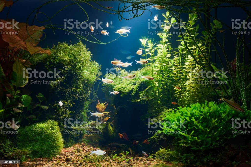 Aquarium in der Nacht – Foto