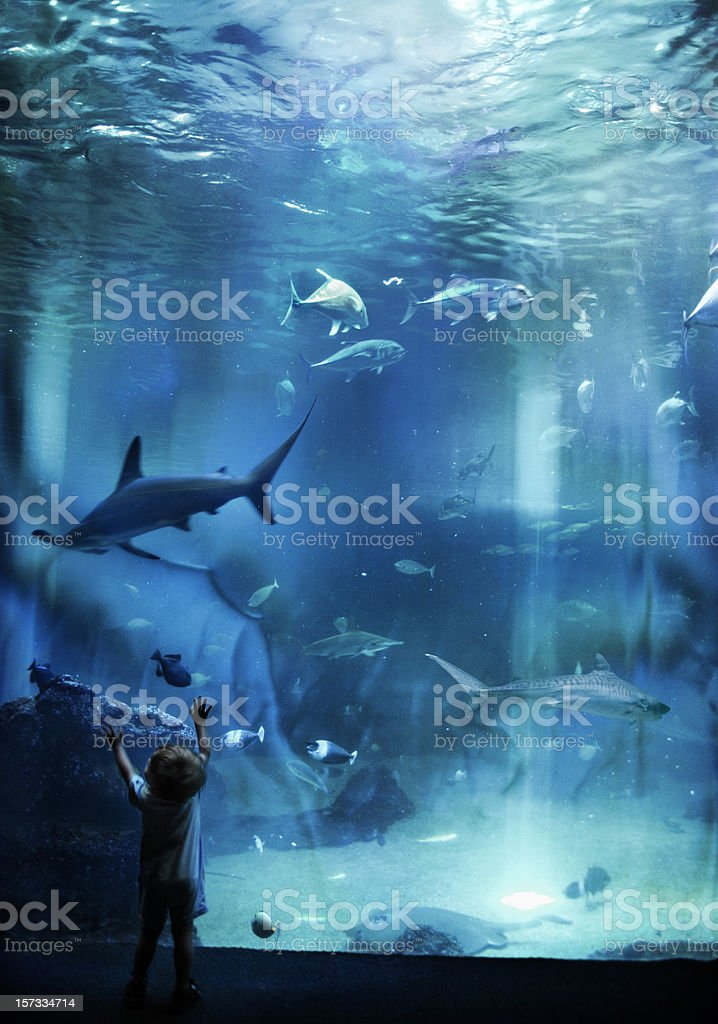Aquarium Awesomeness stock photo