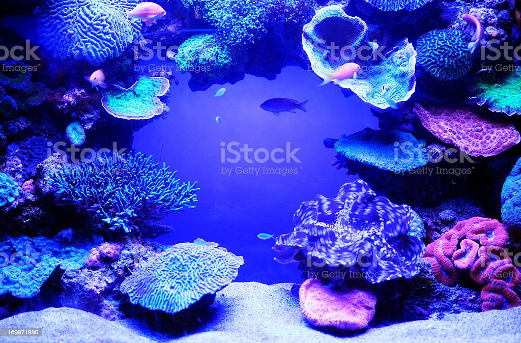 Aquarium fish. stock photo