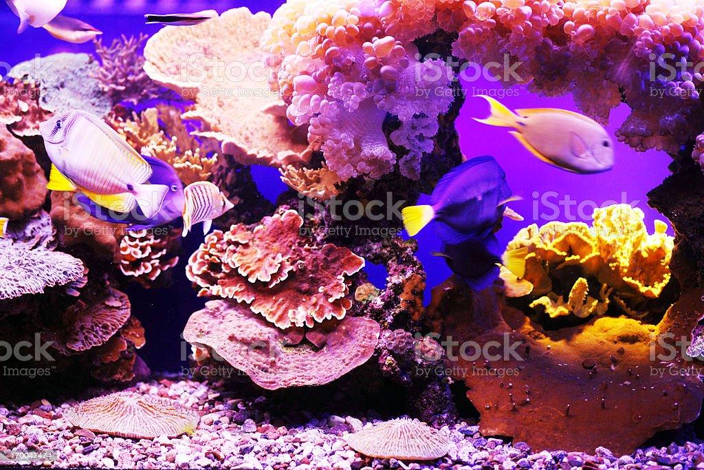 Aquarium fish. stock photo