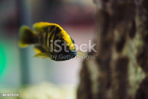 istock Aquarium fish 941673124