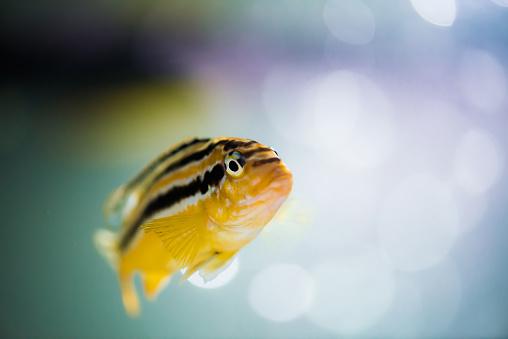 istock Aquarium fish 941673140