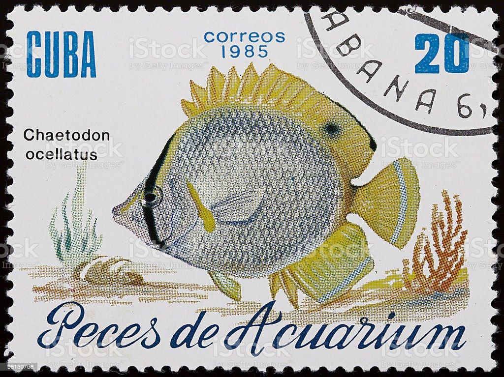 Aquarium fish stamp royalty-free stock photo