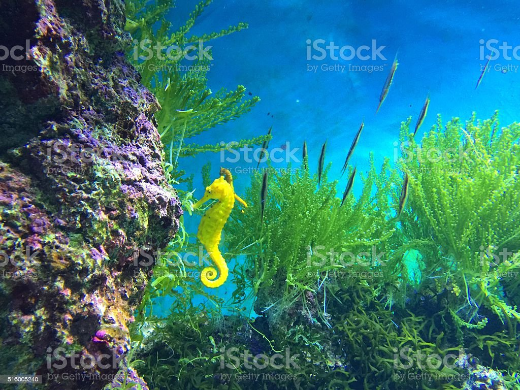 Aquarium fishes and corals stock photo