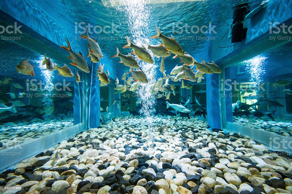aquarium fishes stock photo