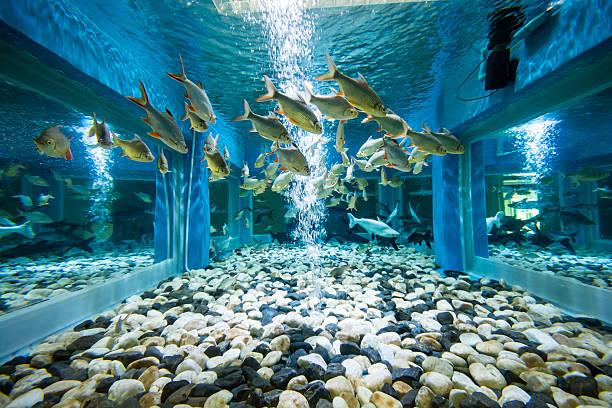 aquarium fishes - home aquarium stock pictures, royalty-free photos & images