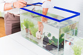 Aquarium for pet and hobby at home. Decorate and fish tank design.