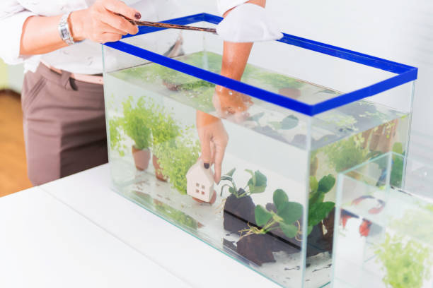 aquarium for pet and hobby at home. decorate and fish tank design. - home aquarium stock pictures, royalty-free photos & images