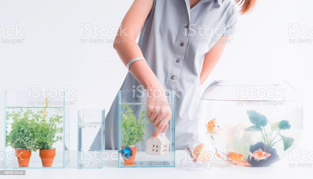 Aquarium For Pet And Hobby At Home Decorate And Fish Tank Design ...