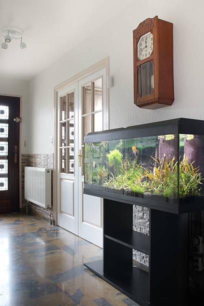 aquarium in corridor vertical - home aquarium stock pictures, royalty-free photos & images