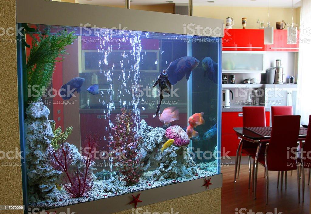 Aquarium in the house stock photo
