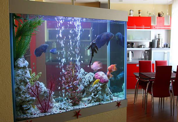 aquarium in the house - home aquarium stock pictures, royalty-free photos & images