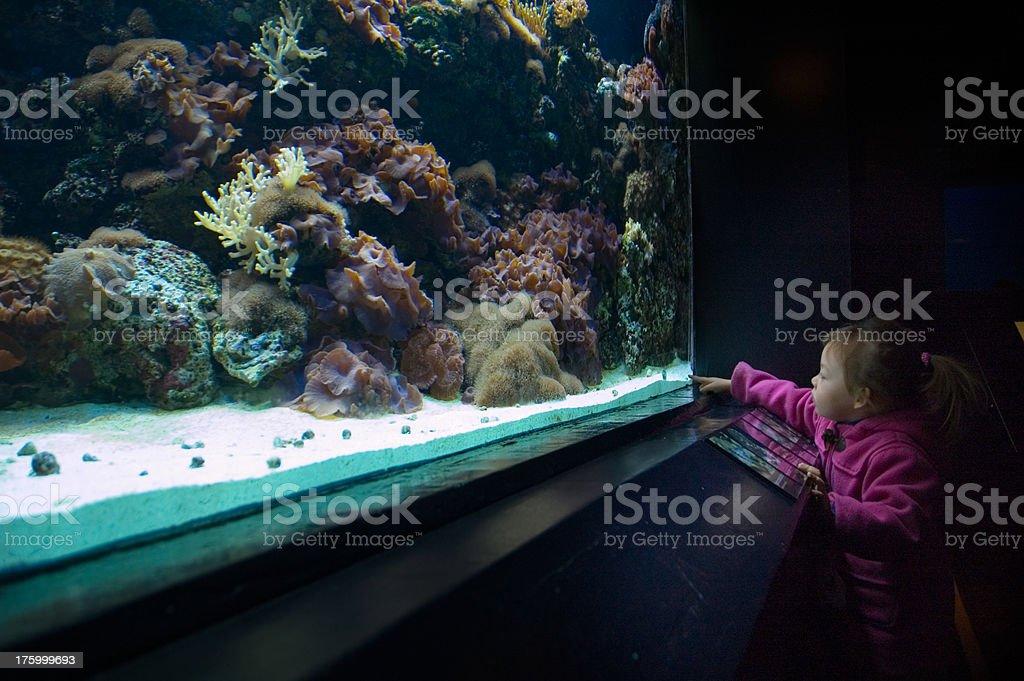 Aquarium Kid