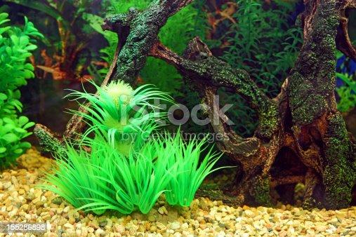 istock Aquarium 155286898