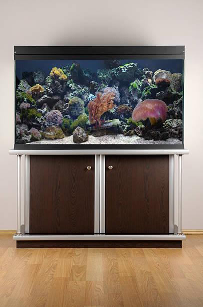 aquarium - home aquarium stock pictures, royalty-free photos & images