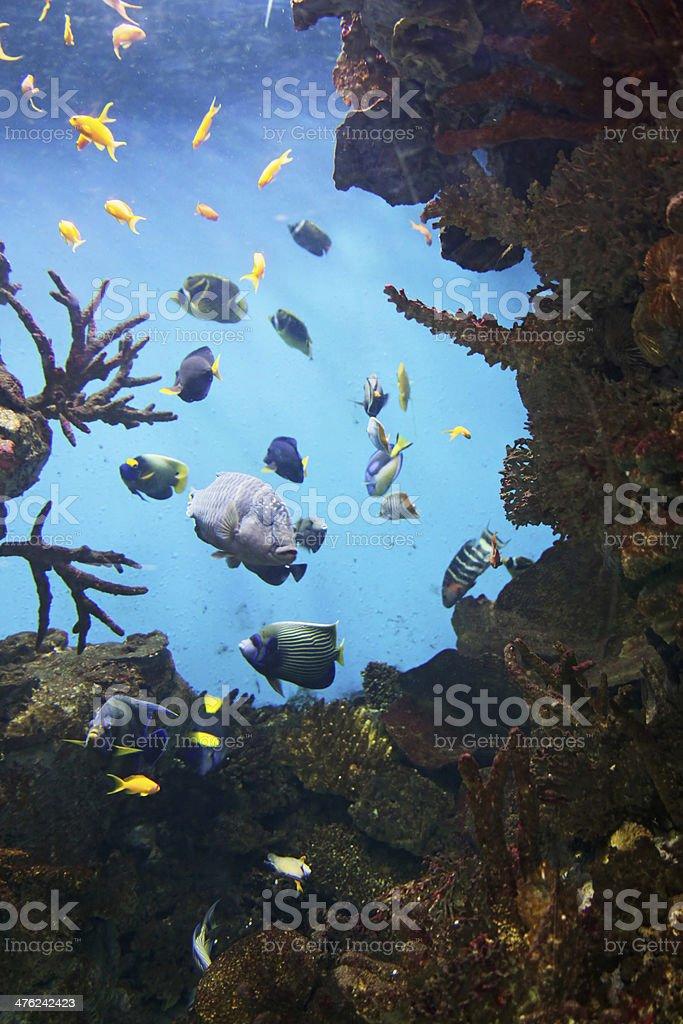 Aquarium royalty-free stock photo