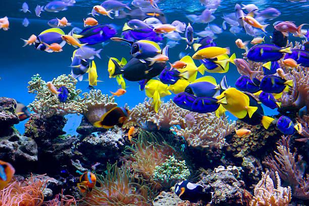 - Aquarium – Foto