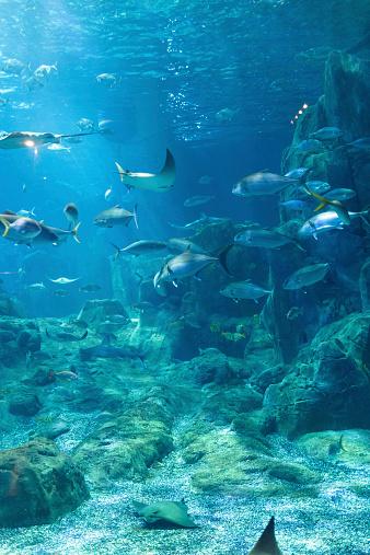 istock Aquarium 535565675